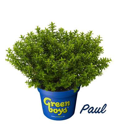 Greenboys® | Hebepflanzen | Paul